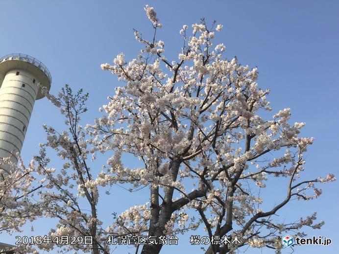 札幌で桜満開 史上5番目の早さ!