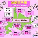 北海道は春爛漫!桜開花の便り続々と!