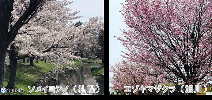 桜前線、長旅はまだ終わらず