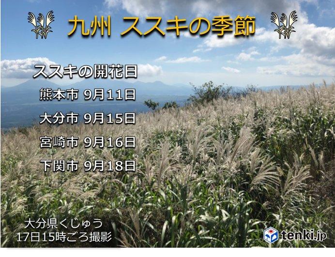 九州の高原 ススキが見ごろ
