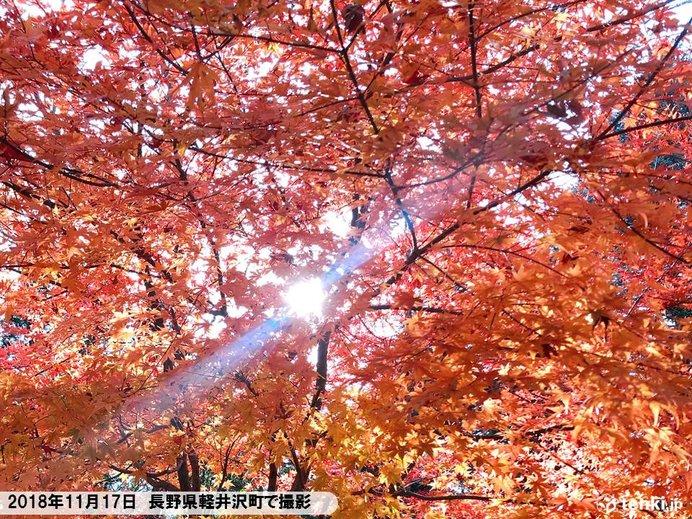 今年の紅葉はなぜ遅い?今週は寒さ戻って色付き進む