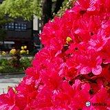 北海道 植物も喜ぶ日差しと暖かさ