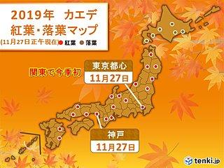 東京都心でカエデが見ごろに 関東で最も早く