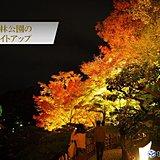 四国 栗林公園の紅葉 今週末が見頃
