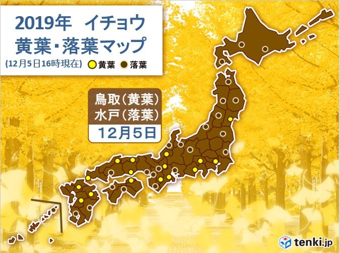 東日本や西日本の市街地 カエデやイチョウが 見頃に