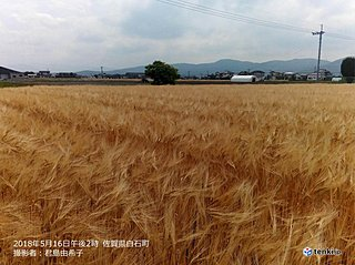 九州北部 麦秋の時季