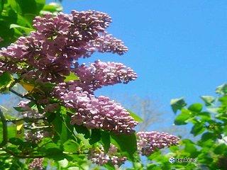 北海道 街角の花も映える青空に