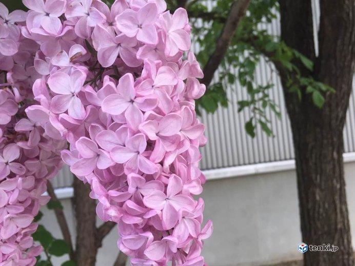 北海道 週末は花のイベント日和