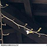 東京や千葉で今年初の20度以上 桜もほころぶ陽気