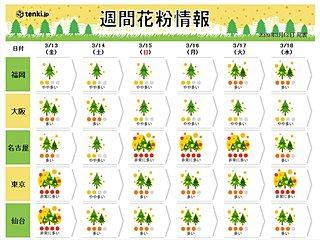 東京の花粉 ヒノキも飛び始めました