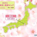 横浜で桜開花 過去2位の早さ 今週は開花ラッシュか