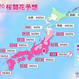 桜の開花・満開はいつ? 日本気象協会 桜開花予想