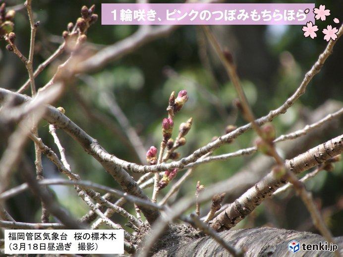 1輪桜の花が咲いている所も