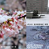 桜に雪 冬と春が同居の3月 初夏の天候と梅雨入りは?