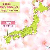 福岡で桜が開花 平年より2日早く