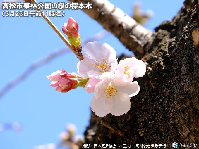 大阪・高松・熊本で桜開花 昨年より3日以上早く