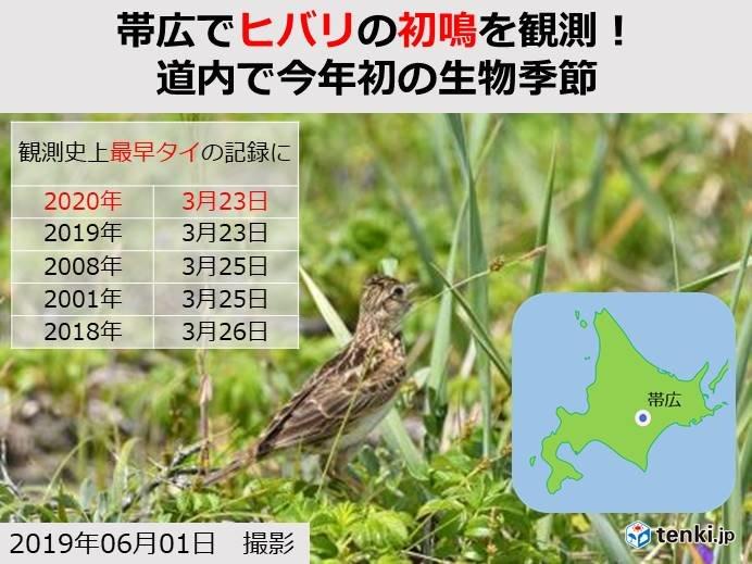 帯広でヒバリ初鳴 北海道で今年初の生物季節に