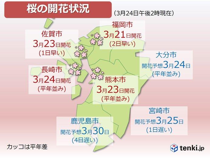 九州の桜前線 北から南へ 来週は見頃に