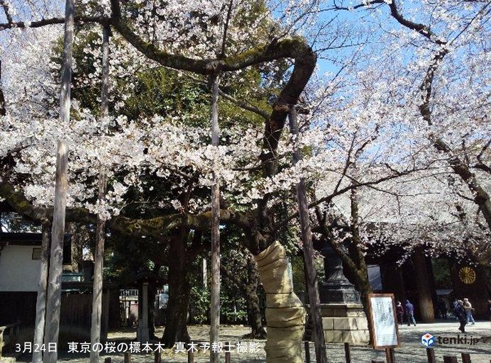 長崎や下関、岡山で桜が開花