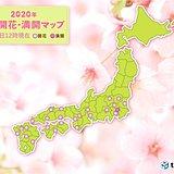 宮崎・松山で桜開花 気温上昇 朝と正午の差10度も