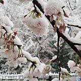 関東 雪ピーク 都心1cm積雪 3月下旬32年ぶり