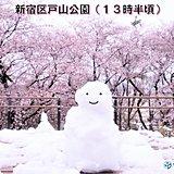 雪だるまのお花見 関東の雪リポート1