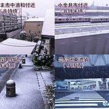 春色の世界から白銀の世界へ 関東の雪リポート2