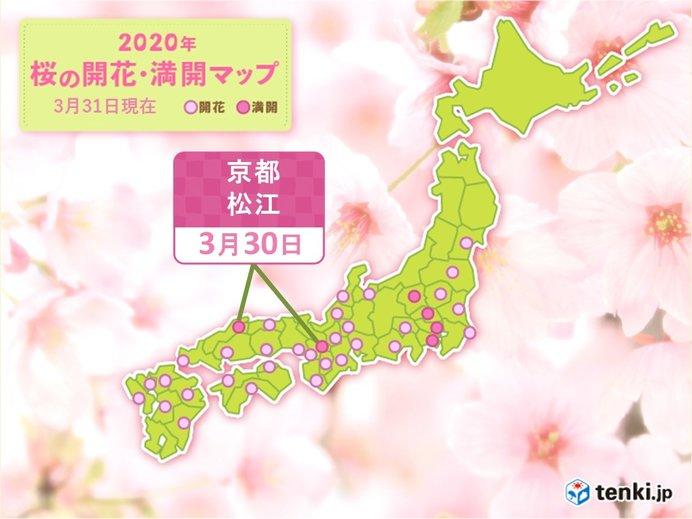 ついに西日本でも満開に 京都・松江から桜満開の便り