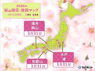 水戸や福井、津、和歌山、岡山で桜が満開