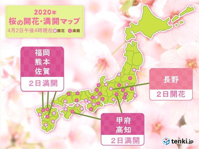 長野で桜開花 満開の便りも続々と