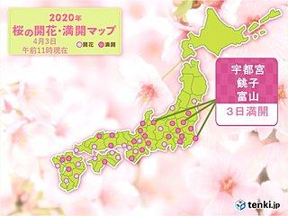 宇都宮の桜 開花から13日もかけて満開に