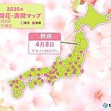 桜前線は東北北部に到達 秋田から開花のたより
