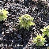 北海道 季節の歩みは遅いが春は苦みを