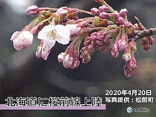 北海道に桜前線上陸 松前で史上3位の早さで開花