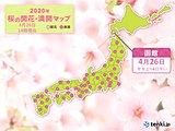 桜前線は北海道に 窓や庭先から春をお楽しみください
