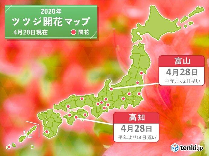 高知・富山からツツジ開花の便り 季節は進む