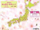 函館でサクラが満開 北海道で今年初の満開