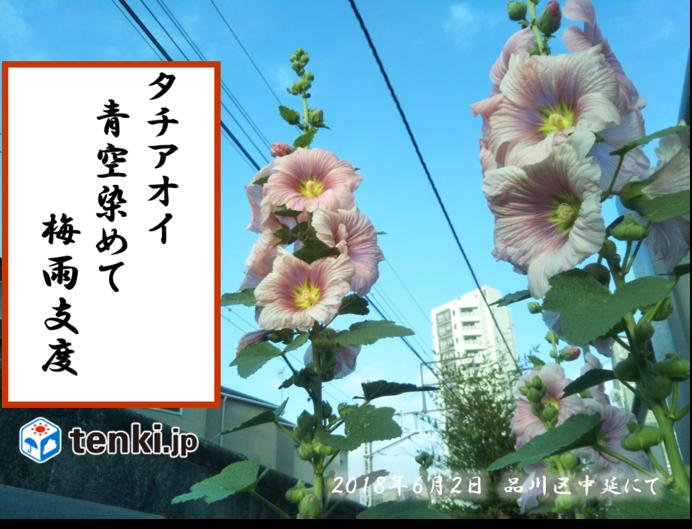 植物が感じ取る梅雨の季節