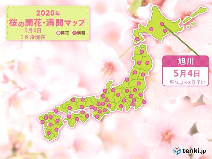 北海道の桜 旭川と帯広 開花からわずか1日で満開に