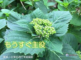 21日 関東、東北中心に若葉寒