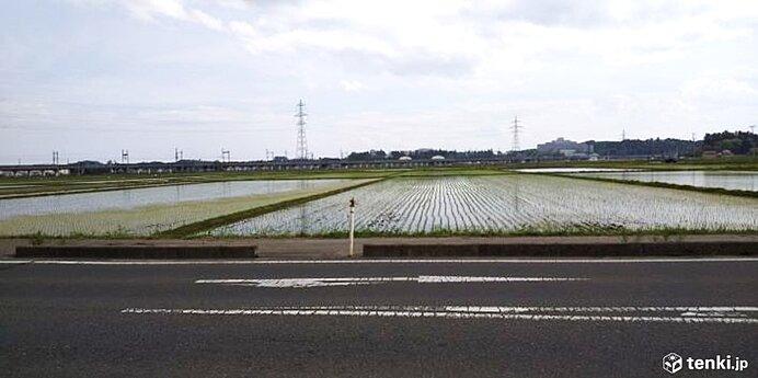東北 23日落雷注意 24日は稲の列緑美しく