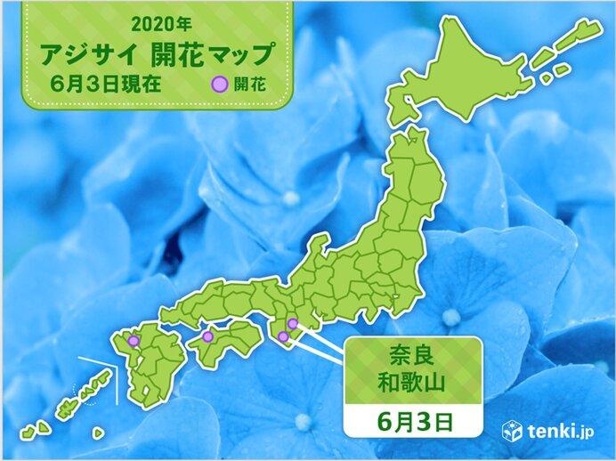 和歌山や奈良でアジサイ開花 観測は真の花