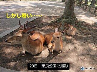 関西 奈良市で今月13日目の真夏日
