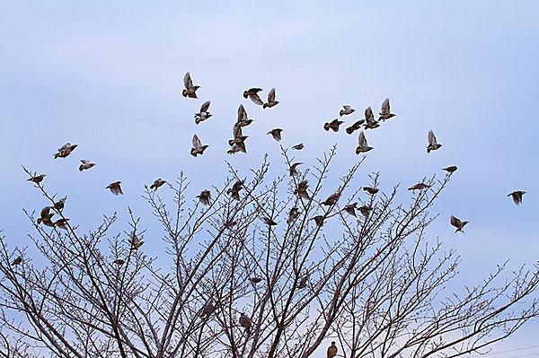 """小鳥が一斉に飛び立つ音に""""ビビって""""逃げた平家軍"""