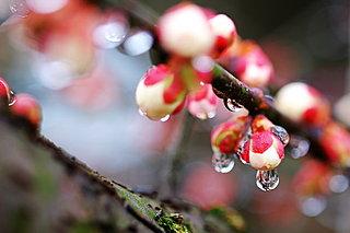 二十四節気「雨水(うすい)」。雪が雨へと姿を変え、氷が解けて水になる季節