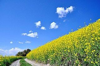 旅立ちの春~「弥生も末…」に込められた芭蕉さんの旅と春に思いをはせて