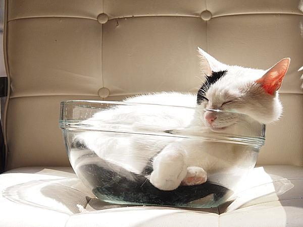 「猫は液体か?」 イグ・ノーベル賞で話題になった「猫は粘度の高い液体」説。
