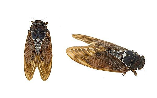 啓蟄☆虫を食べる人が世界で増加中!?「食材としての昆虫」その魅力とは