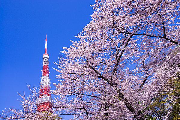 東京タワーは赤と白!  なぜ? ゴールデンゲートブリッジは兄弟のよしみ?!