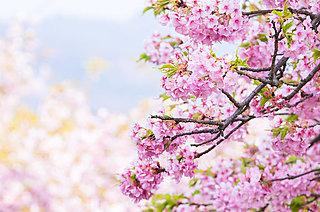 二十四節気「春分」。お彼岸の中日を迎えました。いよいよ春本番!